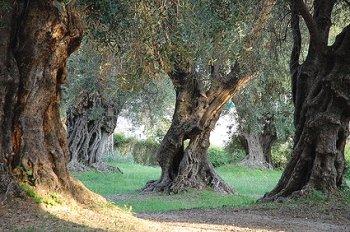 Die gesündesten Länderküchen der Welt (III): Mittelmeerraum
